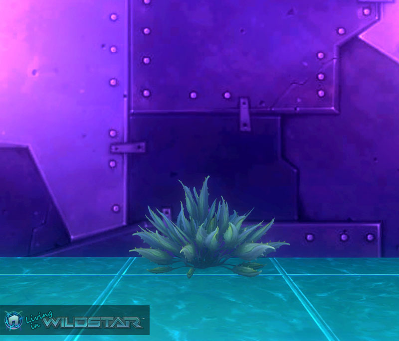 Wildstar Housing - Thorny Aloe